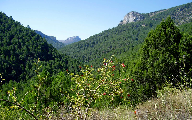 el alto palancia paisaje patrimonio turismo rutas